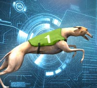New: Virtual Dog Racing!